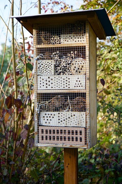 bijen grote lul