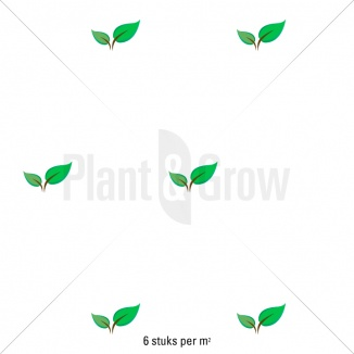 Plantafstand | Geranium 'Rozanne' (pot 9x9cm)