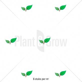 Plantafstand | Hedera helix 'Goldchild' (pot 9x9cm) als bodembedekker
