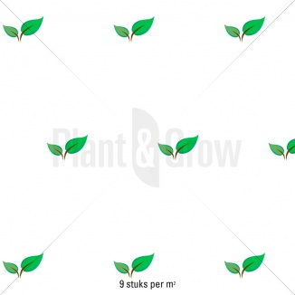 Plantafstand | Hedera helix 'Yellow Ripple' (pot 9x9cm) als bodembedekker