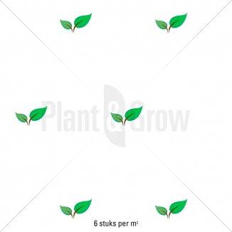 Plantafstand | Heuchera micrantha 'Palace Purple' (pot 9x9 cm)