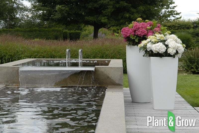 hydrangea macrophylla 39 forever ever white 39 kopen. Black Bedroom Furniture Sets. Home Design Ideas