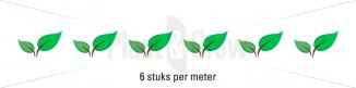 Plantafstand | Ilex crenata 'Convexa' (Ø 9cm pot)