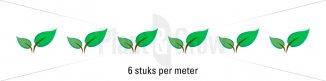 Plantafstand | Ilex crenata 'Golden Gem' (Ø 9cm pot)