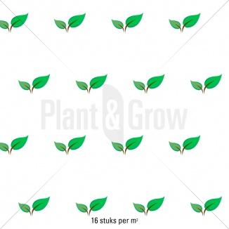 Plantafstand   Pachysandra terminalis 'Variegata' (pot 9x9cm)