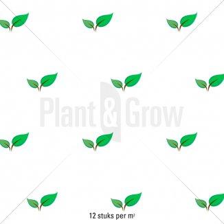 Plantafstand | Pulsatilla vulgaris 'Alba' (pot 9x9 cm)