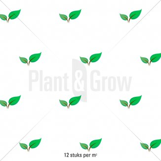 Plantafstand | Pulsatilla vulgaris 'Rubra' (pot 9x9 cm)