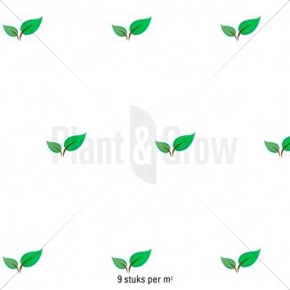 Plantafstand | Vinca minor 'Gertrude Jekyll' (pot 9x9cm)