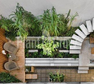 Beplanting voor strakke tuinen