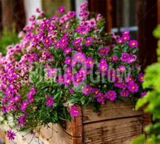 Tuinieren op een klein oppervlakte!