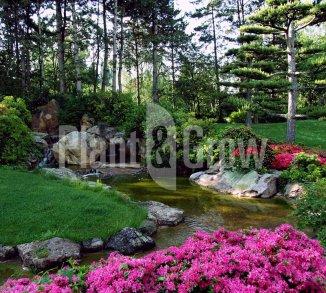 Beplanting voor Oosterse tuinen
