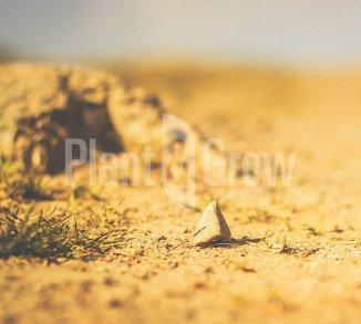 Tuinieren op een droge grond
